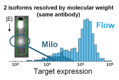 Milo chart - Measure protein isoform heterogeneity - 2 isoforms resolved by molecular weight